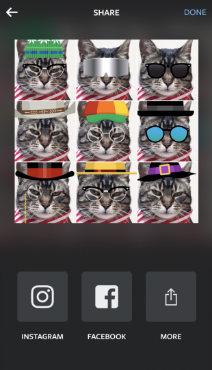 Instagram collage of a cat wearing different accessories