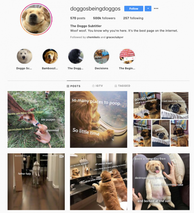 Instagram profile for @doggosbeingdoggos