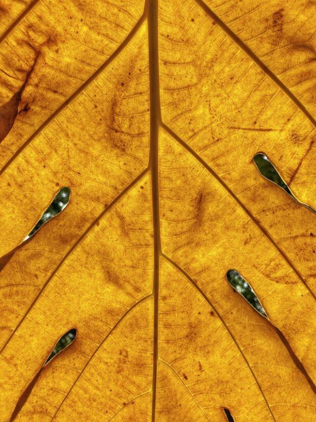 up close shot of a yellow leaf